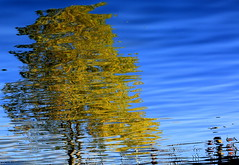 The Tree of Knowledge (maria xenou) Tags: abstractreflection spiegellung moments momente motion emotion colors farben canoneos1100d photodromos fotodromos maria xenou water wasser ioannina tree baum lake see autumn herbst traveling ιωαννινα λιμνη ελλαδα χρωματα φθινοπωρο νερο αντανακλαση αφηρημενηαντανακλαση αφηρημενητεχνη μαρια ξενου φωτοδρομοσ φωτογραφια στιγμεσ ηπειροσ pamvotislake