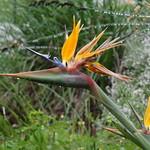 Old Nectar - Stellenbosch thumbnail
