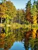 Bunte Bäume im Spiegel (almresi1) Tags: herbst fall autumn trees wood bäume wald forest mirroring reflections spiegelung lake see ebnisee tannen welzheim landscape nature