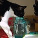 Idaho had to try both jars of water.