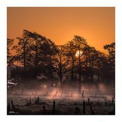 Sonnenlicht auf dem Lande - sunrise in the country (mmsig) Tags: sun sonnenaufgang sonne backlight gegenlicht nebel mist foggy fog dunstsonnenaufgang mmsig weide pasture country eos 60d ef100400 f4556l deutschland germany