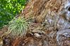 Oberösterreich Mondsee_DSC0674A (reinhard_srb) Tags: oberösterreich salzkammergut mondsee unesco weltkulturerbe baum totholz holz gras neuanfang natur wachstum grün fasern gebüsch vegetation salzburg