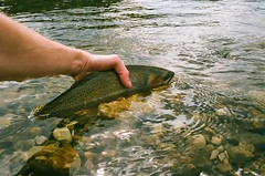 (RelicKnife) Tags: cutthroattrout trout flyfishing film canada keepemwet 35mm alberta