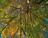 Autumn 2017 (Kuby!) Tags: kubitschek kuby nikon d810 october 2017 springfield missouri mo season fall autumn tree maple leaves red yellow green under