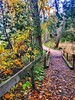 Autumn walks (CCphotoworks) Tags: trees walking outdoors nature trails autumn
