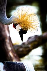 Student (darioD2) Tags: bird student learn etàdellascuola leggere read nikon tamron nature wildpark tamron70200 wildlife