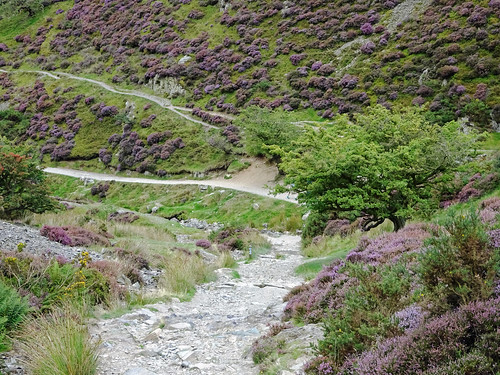 Paths and heather in Cardingmill Valley