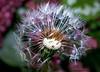 Partir (musette thierry) Tags: d600 musette thierry fleur flor flower flowers reflex 90mm28 vent rouge red automne