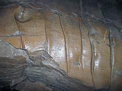Scallops (Rose's Pass, Mammoth Cave, Kentucky, USA) 11 (James St. John) Tags: roses pass scallops dissolution limestone ste genevieve mississippian mammoth cave ridge national park kentucky caves