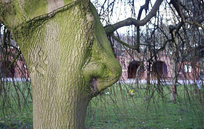 16 gương mặt ma quái tình cờ mọc trên những thân cây vô tri, vô giác - Ảnh 3.