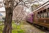 Tunel-Sakura-Kioto-Randen-43 (luisete) Tags: hanami japan randen túneldesakura tranvía tramway japón kioto kyoto