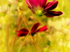 Imperfect (bjg_snaps) Tags: blur bokeh purple flower bloom garden vivid romantic x marks spot