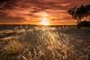Destellos del atardecer _XT23475 (Alberto Estella) Tags: nube libre aire minube mirador paisaje tripode color temperatura arbol rojo cielo exposicion larga star árbol planta hierba estella mar azul costa brava torres agua arena sedosa roca nubes formación rocosa puesta sol fujifilm xt2 bosque senda de campo anochecer avión montañarador montaña