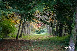 L'automne dans le parc