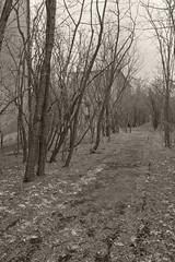 _MG_8374 (daniel.p.dezso) Tags: kiskunlacháza kiskunlacházi elhagyatott orosz szoviet laktanya abandoned russian soviet barrack urbex ruin reclaim
