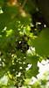 Grapes (sarahrein92) Tags: trauben rot grün weintrauben wein grapes wine srphotography