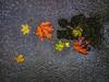 selfi with the fall (rasa@1975) Tags: art artristic artland alternative autumn nikkor nikon naturesoul lightroom explore 365dayproject exploring 365daysart leaves caffe colors outdoor twop texture lightshadow serbia srbija road way weather water aqua brown yellow