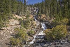 Tangle Falls, Jasper National Park, Alberta (Freshairphotography) Tags: tanglefalls jaspernationalpark icefieldsparkway alberta waterflow waterfalls tiers rockymountains roadsidebeauty roadside tanglecreek canada forest explored explore
