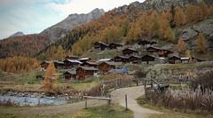 Fafleralp (bulbocode909) Tags: valais suisse lötschental fafleralp montagnes nature automne forêts arbres mélèzes villages hameaux chalets rivières sentiers paysages ponts jaune bleu nuages vert barrières