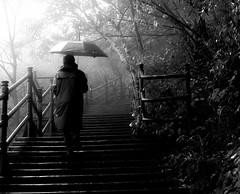 un jour de pluie au Belvédère (photosgabrielle) Tags: photosgabrielle people bwphotography bw noiretblanc rain pluie umbrella parapluie