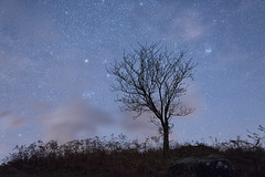 Starry Night with Rowan Tree (Nick Landells) Tags: starry stars night sky rowan tree harterfell lakedistrict lakelandphotowalks autumn