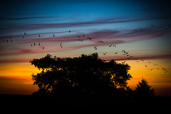 sky (Phil-Gregory) Tags: nikon d7200 sigma18250macro sunset clouds birds tree sheffield nature naturalphotography naturalworld naturephotography colours ngc