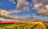 Tulips as far as the eye can see. (Alex-de-Haas) Tags: oogvoornoordholland 1635mm d750 dutch europe hdr holland nederland nederlands nikkor nikon noordholland thenetherlands bloei bloem bloemen bloemenbijeenkomst bloemenveld clouds flower flowerfields flowerbed flowers landscape landschap lucht nature natuur plant skies sky tulip tulipfields tulipa tulips tulp tulpen tulpenvelden wolken