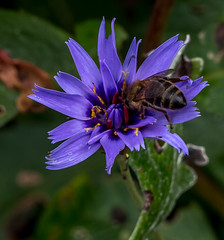 20171015-IMGP0680 (rob mulf) Tags: nymans closeup insects pentax westsussex greatbritian england outdoors nature