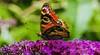 Butterfly. (ost_jean) Tags: nikon d5200 tamron sp 90mm f28 di vc usd macro 11 f004n ostjean
