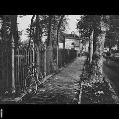 #BIKE2AICADUTI #San Mauro Pascoli IMG_0671 #STESP Viabici (Viabici(c) di StefanoM) Tags: viabici bike2 bicicletta bici bike bicycle cykel fahrrad street city mono bw streetphotography chiaroscuro blackandwhite italia san mauro pascoli