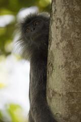 DSC_5534 (Almixnuts) Tags: kualaselangor nature naturepark kualaselangornaturepark