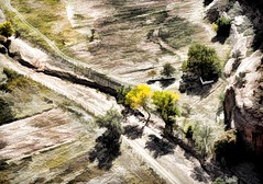 YOU CAN'T WAKE A PERSON WHO IS PRETENDING TO BE ASLEEP (Irene2727) Tags: canyondechelly arizona panorama pano landscape scape trees cottonwood yellow dirtroad sand shadows nature