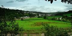 On the Other Side is Devon (Puckpics) Tags: calstock cornwall rivertamar tamarvalley tamarvalleyaonb aonb fields