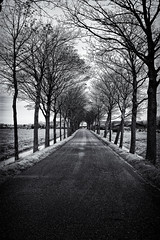Walking Halloween Road (Alfred Grupstra) Tags: tree nature blackandwhite road winter outdoors landscape nopeople street forest scenics branch ruralscene snow coldtemperature monochrome season tranquilscene parkmanmadespace woodland