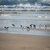 07112017_1993.jpg (aloha033) Tags: oiseau ocean animal lasalie nature