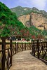 """A walk to the mountain"" I've always dreamt about a place like this, it became true & i freezed it alhamdulillah !! 😇😇 (mohammedmunshi) Tags: mountains walk bridge trees flower people china baoquan bluesky beaty"
