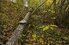 vida después de todo (_DSC6456) (Rodo López) Tags: elbierzo españa explore excapture d7000 devocion arboles bosques castillayleonesvida castillayleon carlzeiss carl nikon naturaleza nature naturalezacautivadora nostalgia naturebynikon otoño