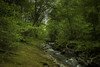 Watersmeet-MossStoneBanking-1-LR (Frank Etchells) Tags: water river devon watersmeet nationaltrust nt