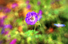 the flower and the garden fairy (LotusMoon Photography) Tags: flower lensbaby nature blossom blooms petals vividcolor bright colorful slidersunday hss garden happysliderssunday autumn annasheradon lotusmoonphotography