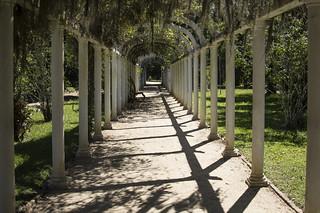 Carramanchão in the Botanical Gardens, Rio de Janeiro.