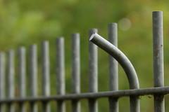 Great escape? (AngharadW) Tags: dauddegpedwar inexplore explore schoolgrounds cobweb dof greatescape angharadw friday fence fencefriday hff