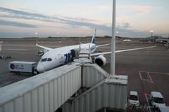 ブリュッセル空港 NH232 (GenJapan1986) Tags: 2017 ana b7878 ブリュッセル ブリュッセル空港 ベルギー 旅行 空港 飛行機 airport airplane travel belgium brussels