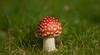 a little gem (paul hitchmough photography 2) Tags: mushroom nature boken macro liverpool seftonpark uk nikond800 nikon2470mm nikonphotograhy paulhitchmoughphotography