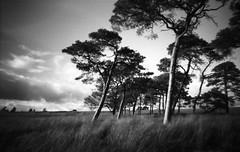 Kippen Muir 6x9 (michael prince) Tags: scotland stirling pinhole film 120 mediumformat nooncamera kippenmuir