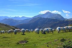 Iraty_5827 (Luc Barré) Tags: iraty larrau basque montagne mouton france chalet chalets