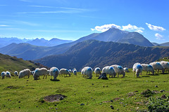 Iraty_5827 (lucbarre) Tags: iraty larrau basque montagne mouton france chalet chalets