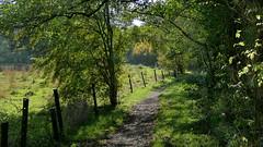 Le sentier (BrigitteChanson) Tags: aiseau aiseaupresles hainaut wallonie sentier path sentiero clôture arbres ruby5
