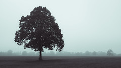 Downs Tree (gothick_matt) Tags: bristol autumn durdhamdown places downs uk tree clifton park public unitedkingdom