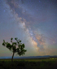 Lonely tree, Kyrgyzstan (Mike Reva) Tags: astrophoto astronomy astrophotography astro stars sky stargazing stillness samyang24 night nightsky nghtsky nightscape nature nights starrynight samyang kyrgyzstan