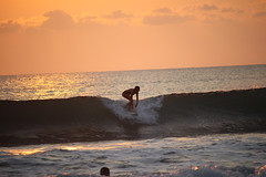 GOLD SURFERS